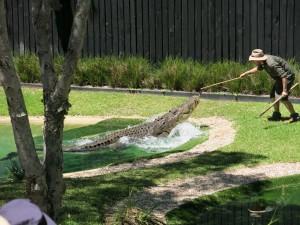 Australia Reptile Park 2014