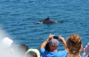 Dolphin Cruise